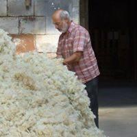 laine lavée prête pour la réalisation de la literie en laine